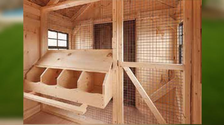 Inside Chicken Coup Sheds Quebec West Quebec Shed Company
